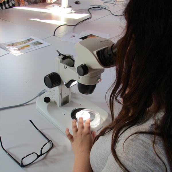 2a WEZ microscope