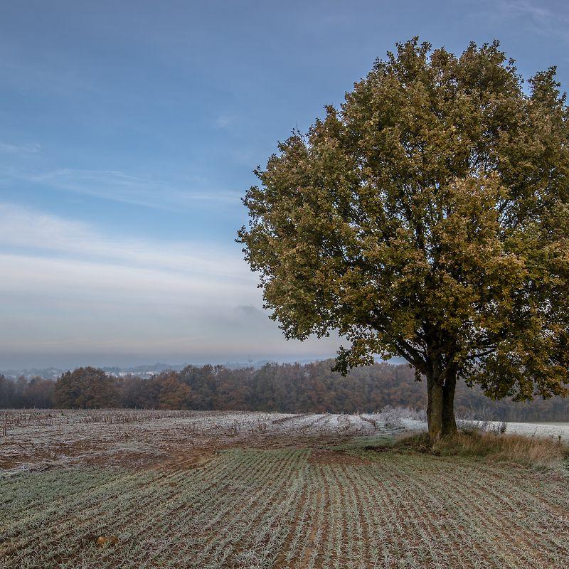 arbre solitaire Wort