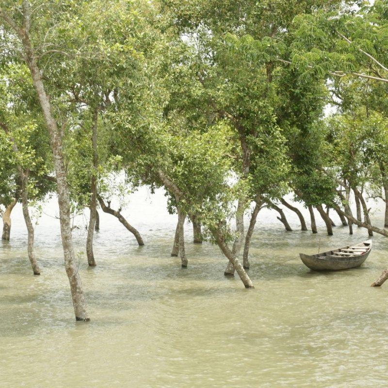 friendship mangrove